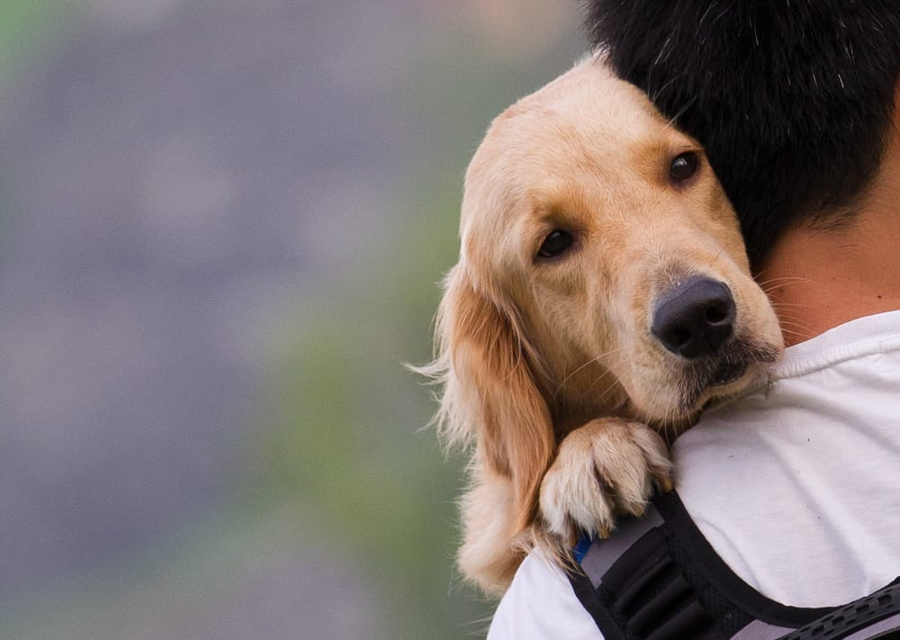 How Can Owning a Dog Help You with your Addiction - Lakehouse